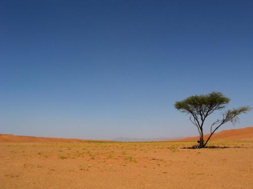 Shade in the Sharqiya Sands, Oman