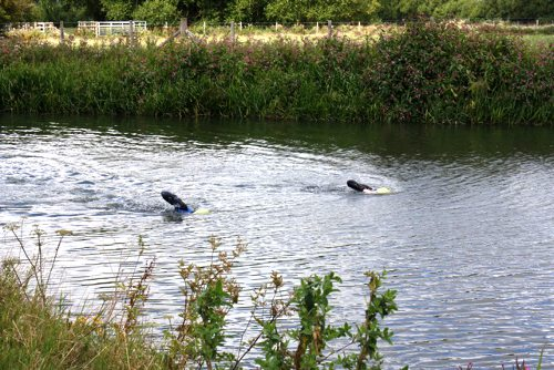 Front crawling - Swimming the Thames
