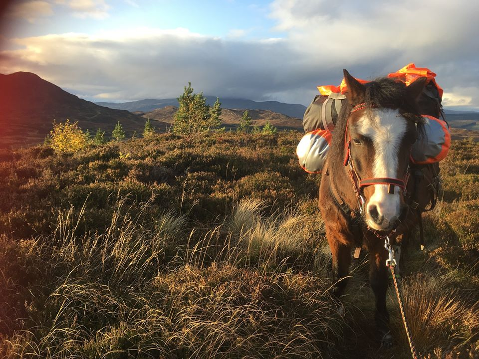 Sue Manning - Scotland with a Pack Pony